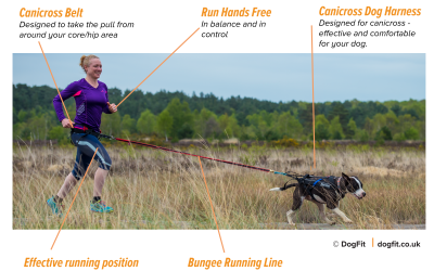 What kit do you need to Canicross with your dog?