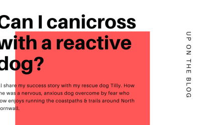 What can I do if I have a reactive dog?