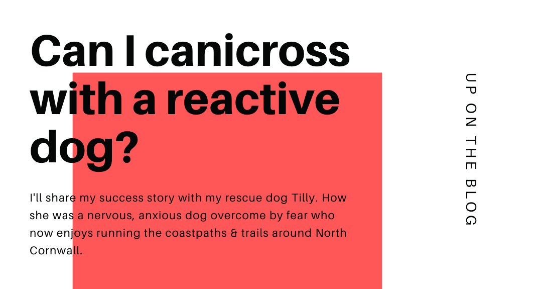 canicross with reactive dog
