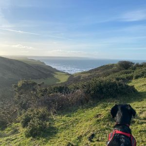 Canicross at Sandymouth